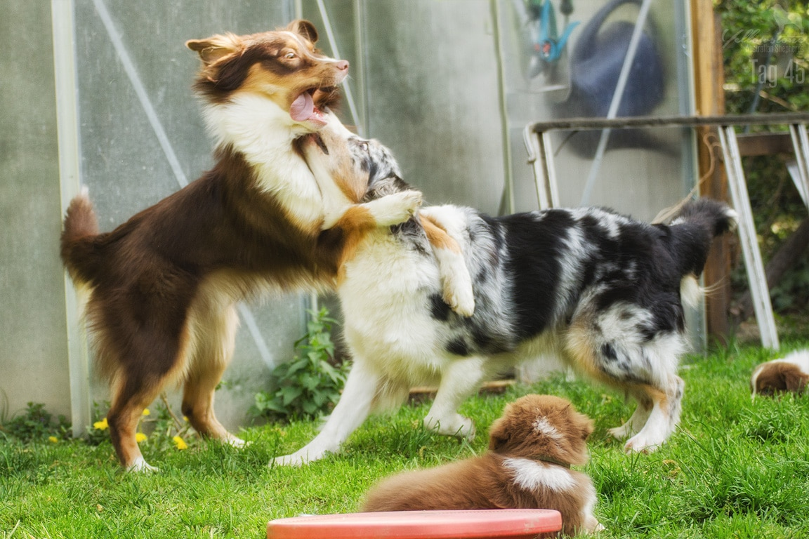 Maisy Stuart Impressionen 169 - Entwicklung des Charakters eines Hundes