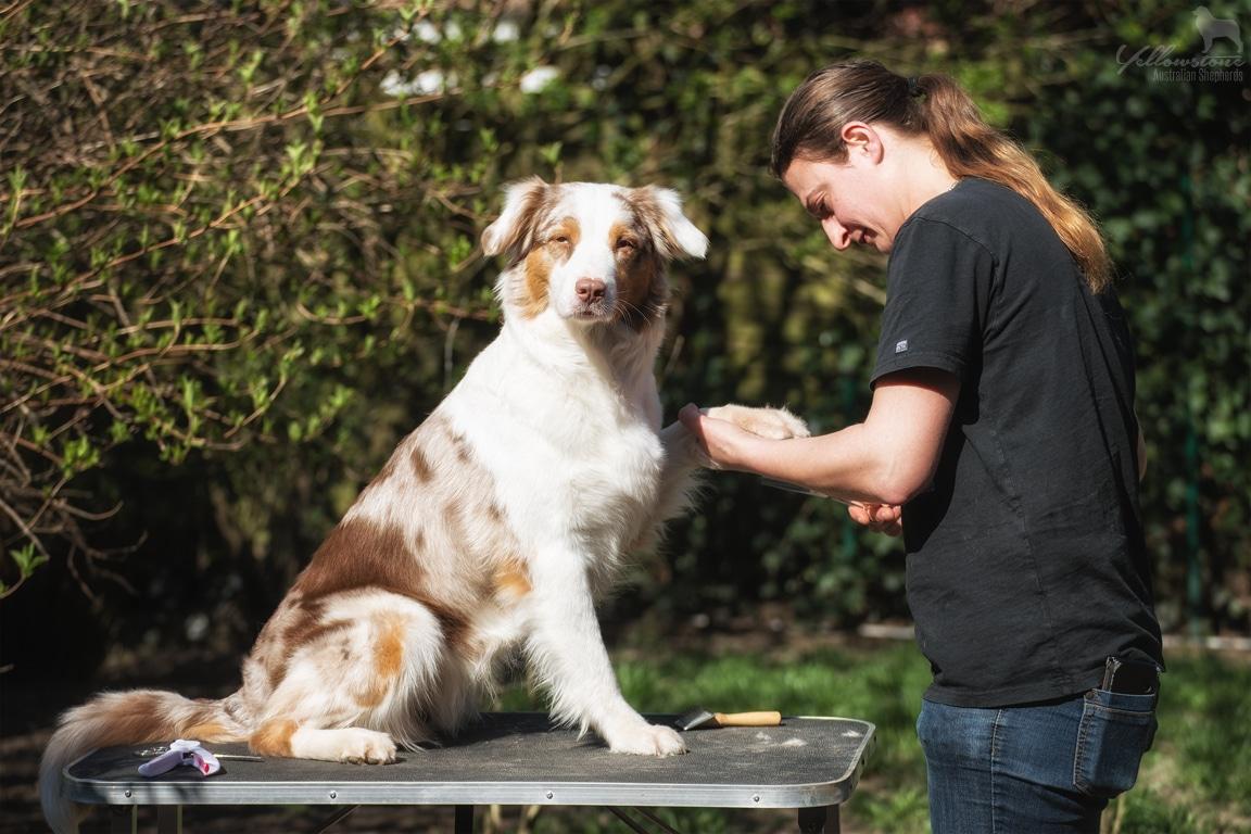 Quincy Grooming Silvia 1 - Grooming Zubehör