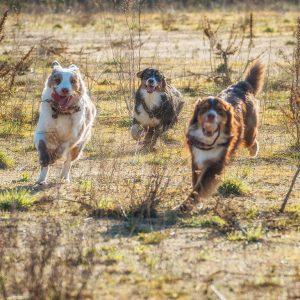 Verden Wolfcenter 2015 19 300x300 - Wie sind Aussies eigentlich wirklich...