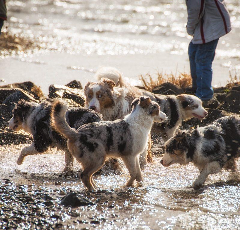 Yellowstone Walk 01.03.2015 25 800x768 - Hundeverhaltensknigge