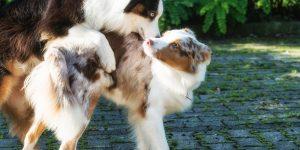 Deckung Atasi & Maisy