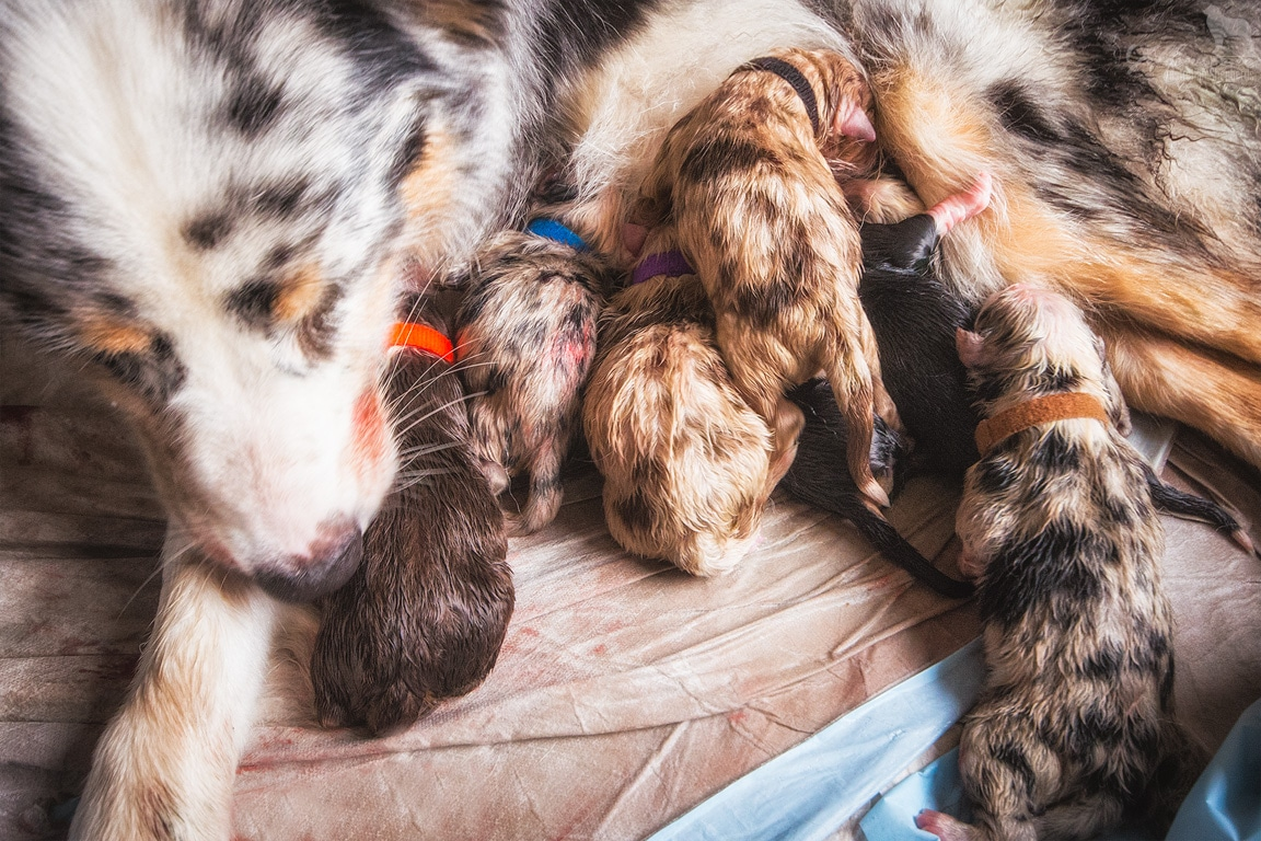 geburt josie cooper - Canines Herpesvirus Typ 1