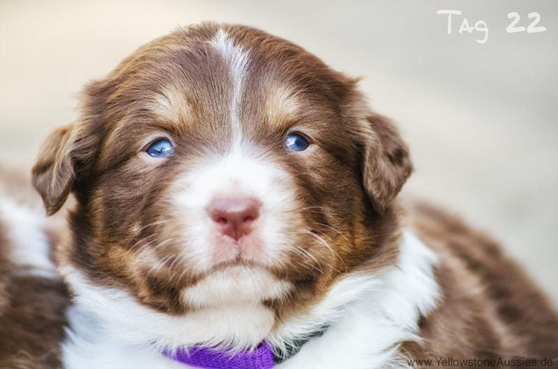 maisy stuart imp tag22 08 - Entwicklung des Charakters eines Hundes