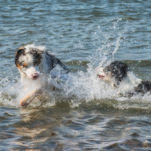 yellowstone walk august 2015 243 300x300 - Züchter schwimmen im Geld?!