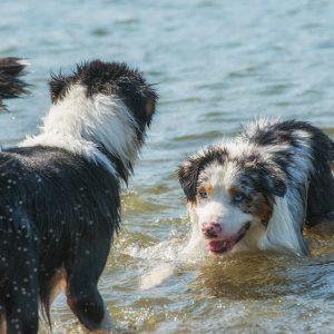 yellowstone walk august 2015 252 300x300 - Züchter schwimmen im Geld?!