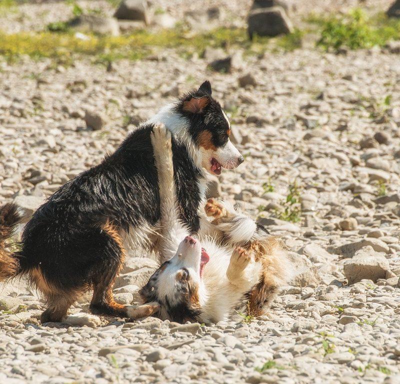 yellowstone walk august 2015 96 800x768 - Yellowstone Walks
